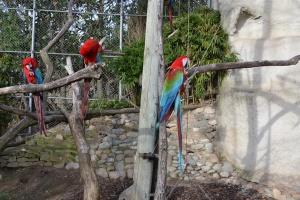 Espace Zoologique de Saint Martin La Plaine